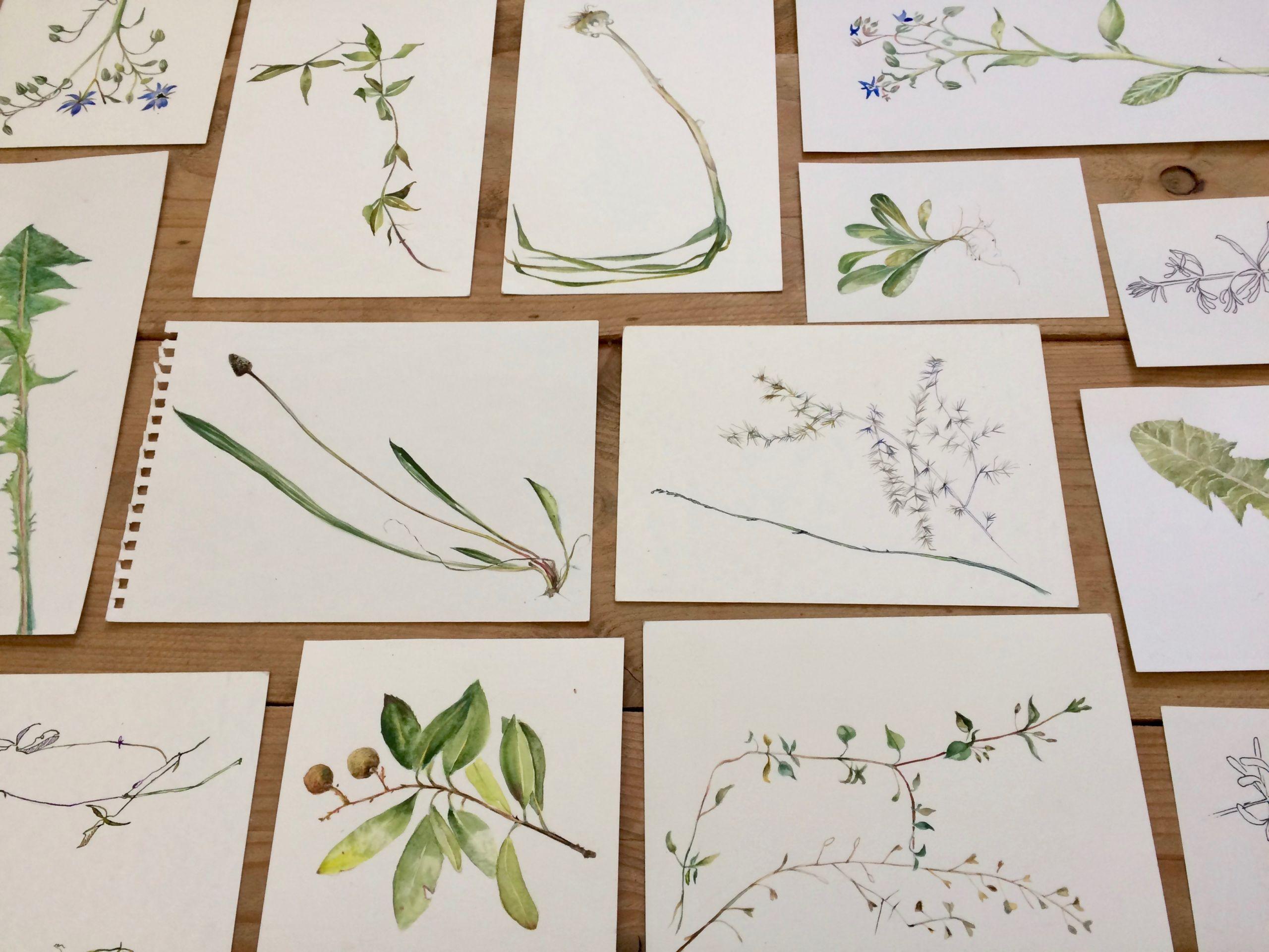 Inventaire des urgences, détail des planches botaniques